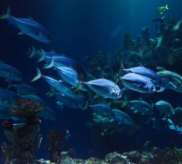 akwarium-gdynskie
